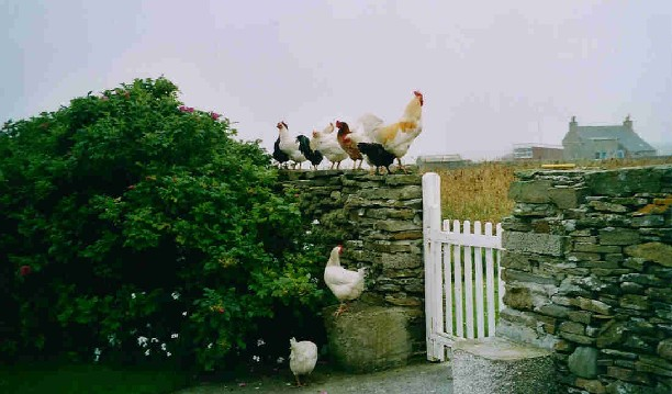 Free range egg producers at Daybreak